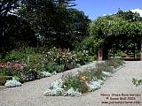 Nancy Steen f rose garden